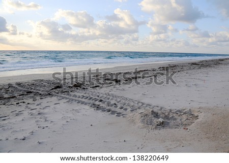 Sea turtle nest on the beach with tracks to the ocean, coming and going