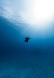 Sea Turtle Sun Rays