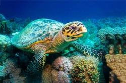 Sea turtle underwater reef aquarium scene