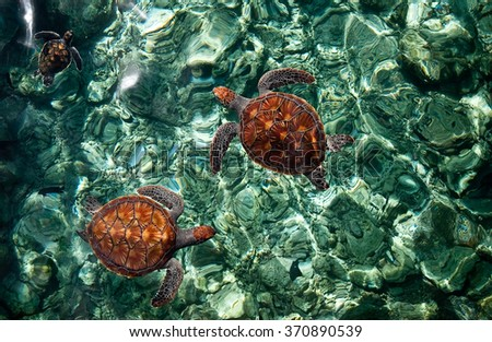 sea turtles babies in the...