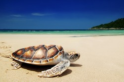 Sea turtles on the beach