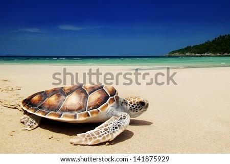 Sea turtles on the beach #141875929
