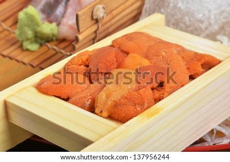 sea urchin? - stock photo
