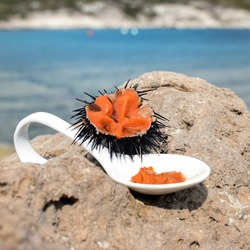 Sea Urchin and a Spoon