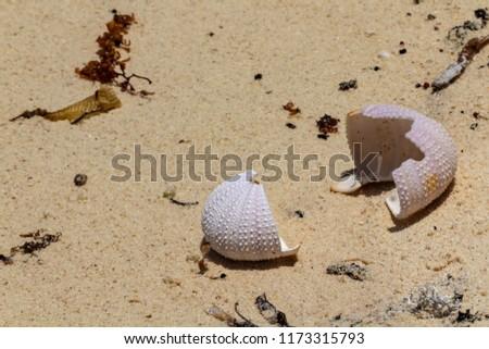 Sea urchin exoskeleton on sandy beach. Closeup on calcium details. They make beautiful decorative elements