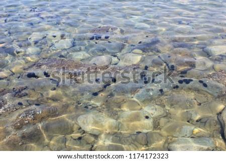 Sea urchin in the sea. #1174172323