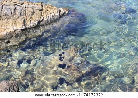 Sea urchin in the sea. #1174172329