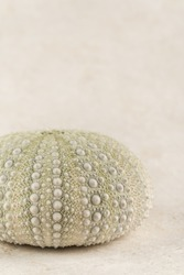 Sea Urchin Shells Nice composition with Urchin seashells that create a Zen-like atmosphere of simplicity and subtle texture