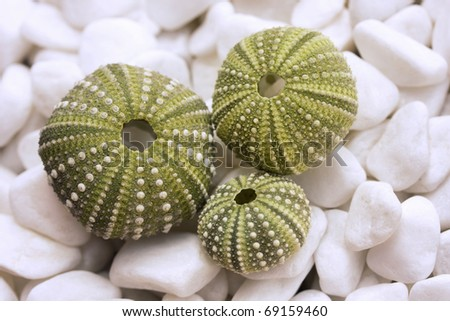 Sea urchin shells on pebbles