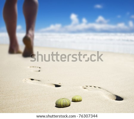 Sea urchin shells with the calves of someone walking on the beach in the background