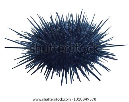 Sea urchin Strongylocentrotus nudus on white background Stockfoto ©