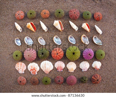 sea urchins and shells on wet sand, natural background
