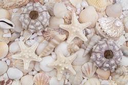 Sea urchins, starfish, white stones and seashells as background