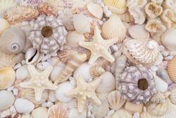 Sea urchins, starfishes and many seashells