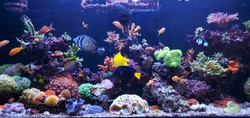 sea water aquarium captures of caral and tropical fishes