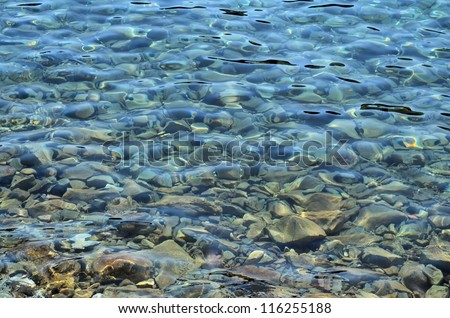 Sea water near the rocky pebble beach background. Selective focus, sunny day - stock photo