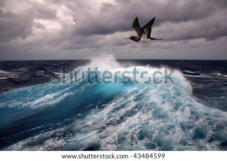 sea wave and seagull