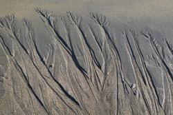 Sea weed patterns on the wet sand of Skarðsvík beach, Iceland