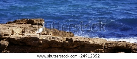Sea white bird on a rocky blue mediterranean shore, egretta