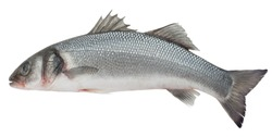 Seabass isolated on white background, clipping path, full depth of field