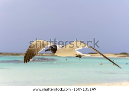 Seabird flying in the wind on the beach #1509135149