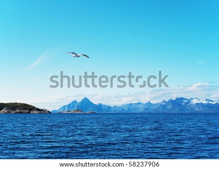 Seabird over North sea