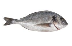 Seabream isolated on white