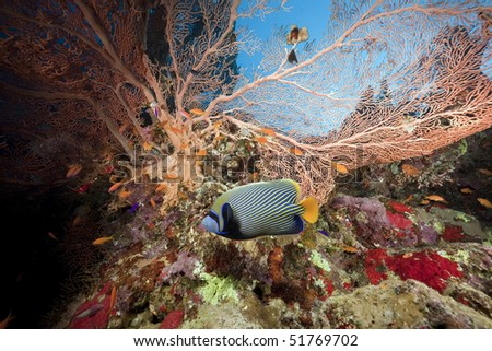 seafan, ocean and fish taken in the Red Sea.