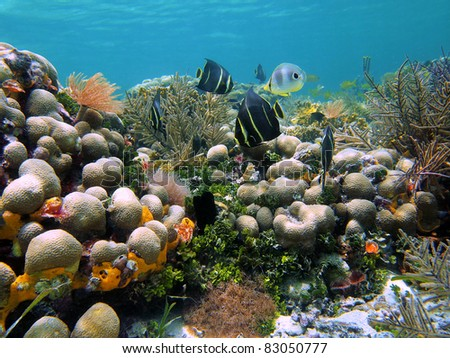 Seafloor with corals and tropical reef fish in the Caribbean sea, Bocas del Toro, Panama