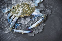 Seafood crab on ice / Fresh raw Blue Swimming Crab on dark background in the restaurant