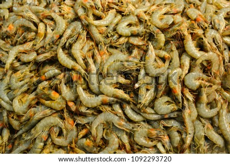 Seafood - freshly caught shrimps #1092293720