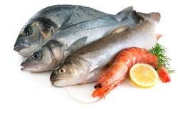 Seafood isolated on white backround