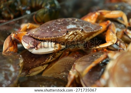 Seafood Market Live Dungeness Crabs. Live Dungeness crabs for sale at a Seattle market.
