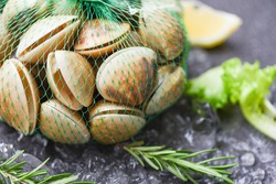 Seafood shellfish on ice frozen at the restaurant / Fresh shell clam with herb ingredients for salad , enamel venus shell , saltwater clams