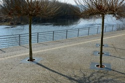seafront with plane trees growing out of the lattice in the pavement. a beige concrete staircase serves as a theater bench overlooking the river. paving stone paving blocks cubes on the promenade