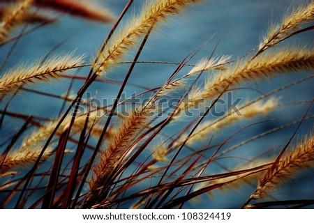 Seagrass #108324419