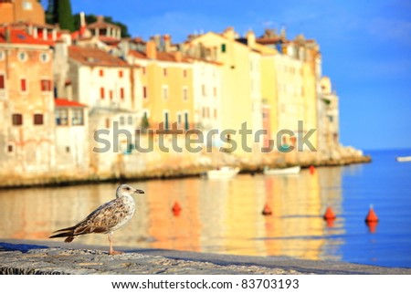seagull at harbor of Rovinj, Croatia