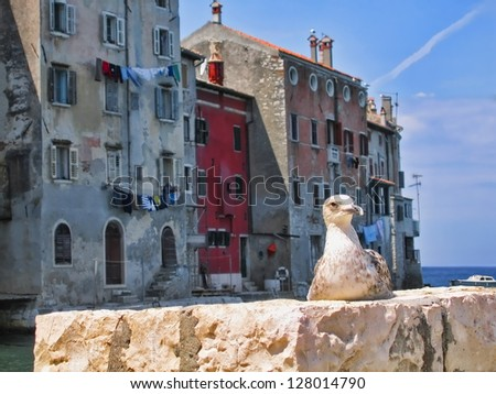Seagull at Rovinj, Croatia