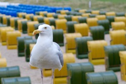Seagull at the beach of German island Ruegen with traditional beach chair in the background