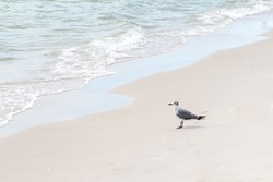 Seagull at the beach sand in Naples city Florida
