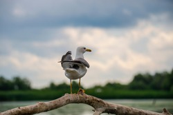 Seagull bird on the branch of tree