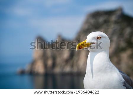 Seagull bird or seabird standing feet on sea beach. Close up view of white gray bird seagull in sea rock. Wild seagull portrait on natural blue sky background. Sea gull bird animal closeup isolated Stockfoto ©