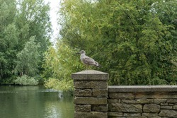 Seagull bird sitting on a stone fencein in the East park