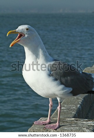 Seagull by the ocean with beak wide open
