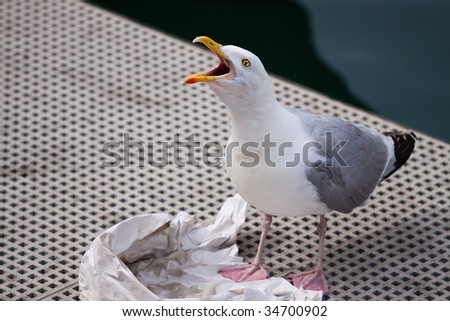 Seagull calling in between eating fish and chips