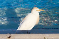 seagull close-up in pool water