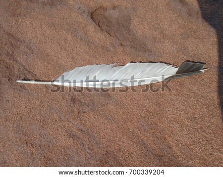 Seagull Feather #700339204