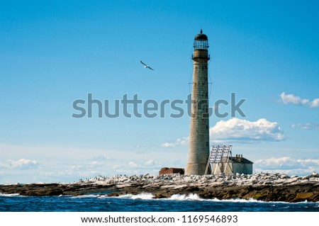 Seagull flies by the stone tower of Boon Island lighthouse, the tallest beacon in New England on a summer day. The lighthouse is located on a tiny rock island. #1169546893