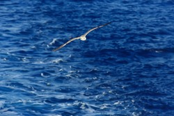 seagull flies over the sea, concept sea vacation summer, bird freedom flying