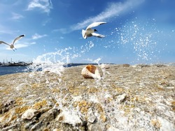 seagull  flight and seashell on stone at beach sea water splash and on horizon yachting  club harbor blue sky and ocean nature landscape